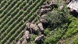An aerial photo released by the Yunnan Forest Brigade shows a migrating herd of elephants in southwestern China's Yunnan Province, July 13, 2021.