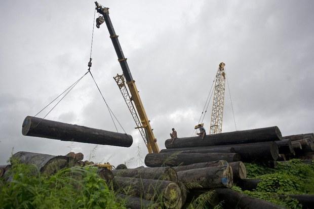 Myanmar's forests under pressure from illegal logging, smuggling