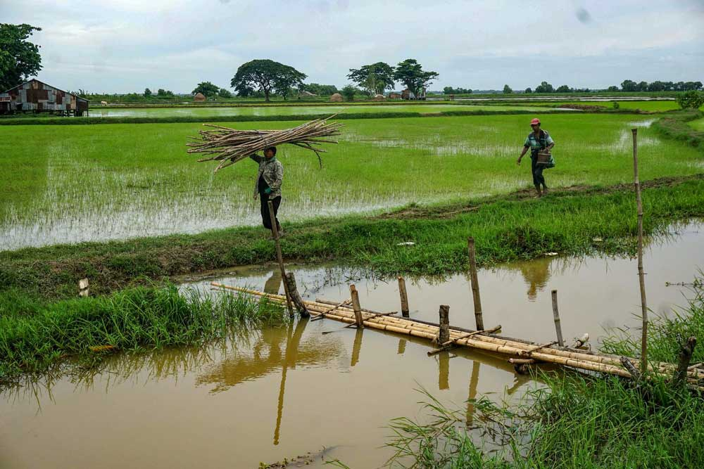 More than 40 percent of Myanmar's agricultural production is devoted to rice. Myo Min Soe/RFA