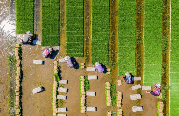 China's Central Government Moves to Take Back Leased Rural Land