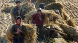 North Korea sends farmers to labor camps for hiding corn amid food shortages