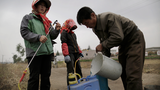 North Korean cabbage farmers mix fertilizer in this file photo.