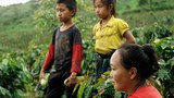 An ethnic Hmong woman and two children are seen on a coffee plantation in Houaphanh province, eastern Laos, June 27, 2018.