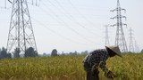 A farmer works in a paddy field under the power lines near Nam Theun 2 dam in Khammouane province in a file photo.