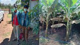 Two Lao Banana Workers Denied Their Pay Walk 250 Miles Home